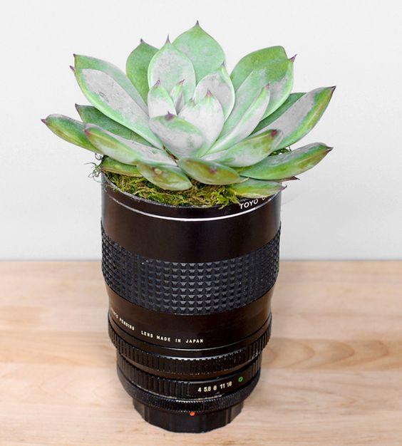 lentille cactus Kodak Express Paris 2