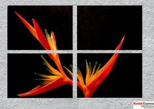 Macro photo fleur panneau photo noir et rouge Kodak Express Grands Boulevards