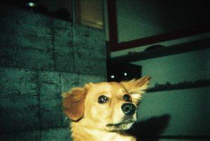 Photo Flash en soirée Portrait de chien
